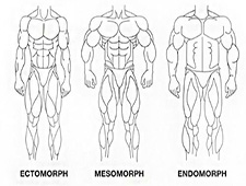 Male Body Type Test