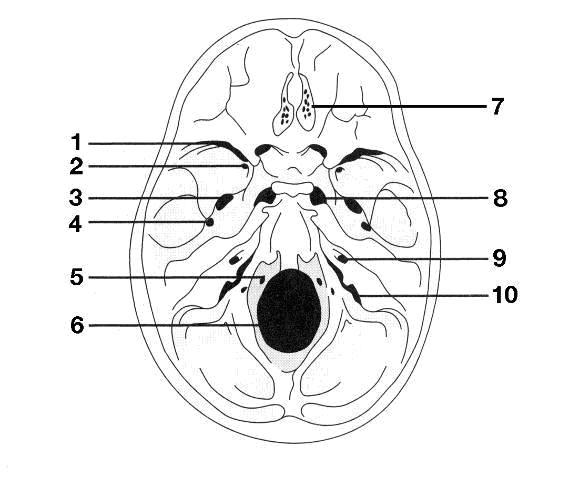 cranial foramen