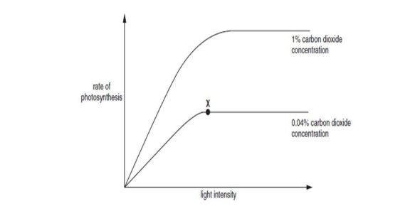 what factors limit photosynthesis Factors affecting the rate of photosynthesis biology essay print  nahco3 had been raised above a certain level increasing the rate further would have no effect as there would be other limiting factors limiting the rate of the reaction  the fact that the curve levels off so quickly indicates that there is another limiting factor.
