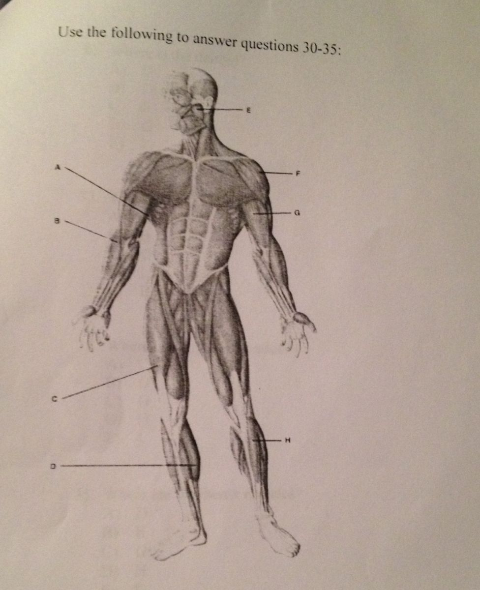Gemütlich Hesi A2 Anatomy And Physiology Practice Ideen ...