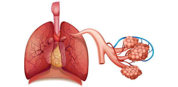 Respiratory System Quizzes & Trivia