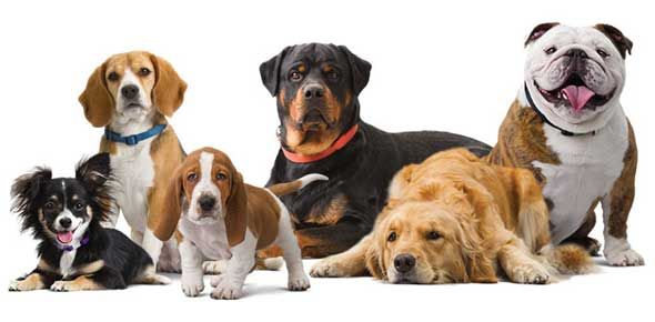 Small Dog Breed Best For Me Quiz
