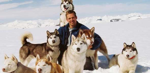 it is eight below 2006 trivia time proprofs quiz