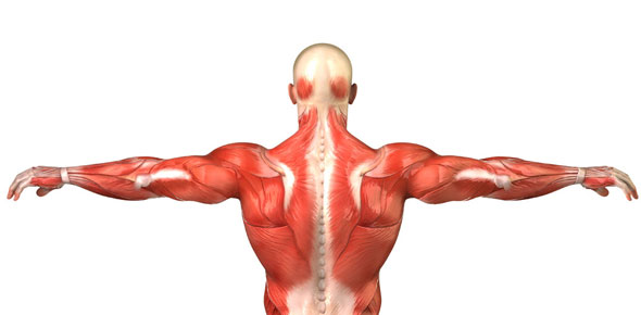 Musculoskeletal Quizzes & Trivia