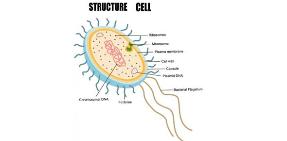 Cell Structure Quizzes & Trivia