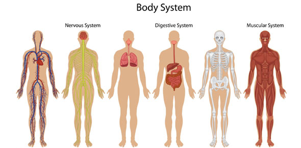 Body Systems Quiz ProProfs Quiz – Body Systems Worksheet