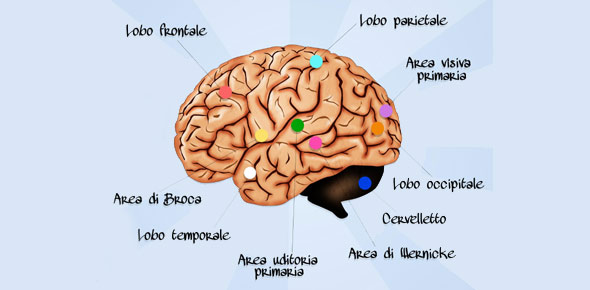 the eye and nervous system questions essay (cns) central nervous system (the brain and the spinal cord) effects of certain   the structure of the eye  past life science question papers and their memo.