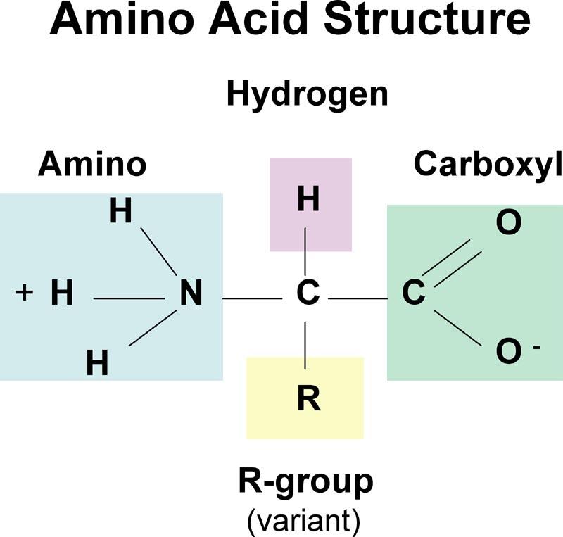 Ch 5 Molecules Of Life Proprofs Quiz