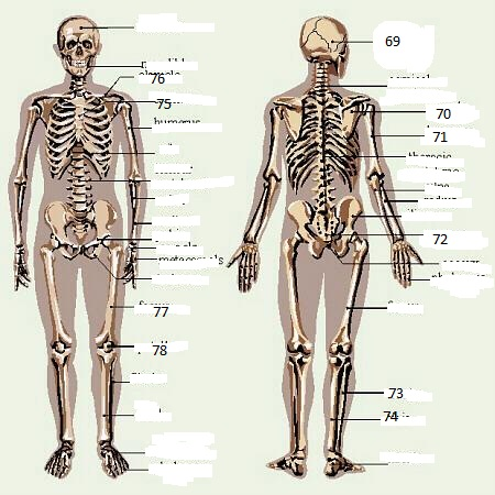 Anatomy & Physiology Review Questions - ProProfs Quiz