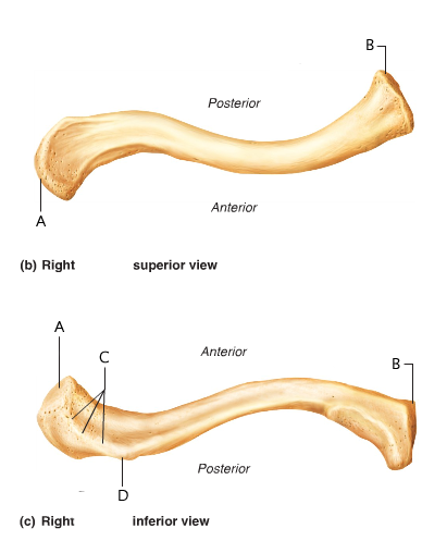 Anatomy And Physiology 141 Lab Practical 2 - ProProfs Quiz