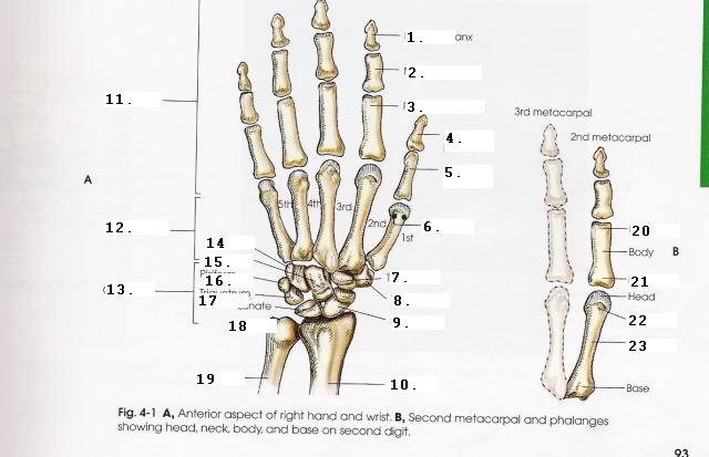 Radiographic Procedures Upper Limb Proprofs Quiz