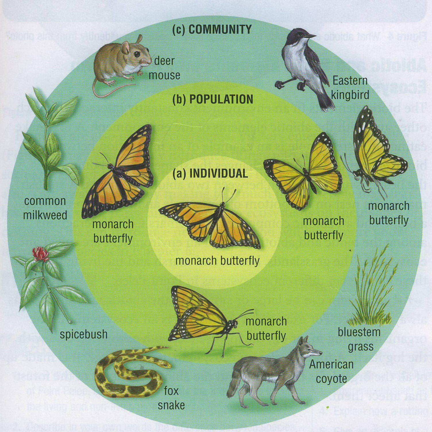diagram of ecosystem