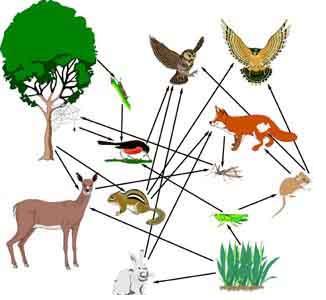 Ecology-ecosystem Quiz