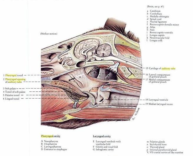 Anatomy Ii Class Proprofs Quiz