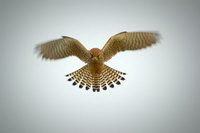 The Hawk Conservancy Trust Birds Of Prey Quiz
