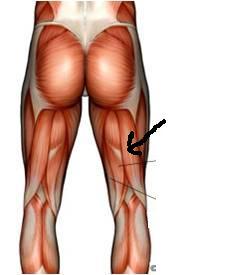 Muscles quiz