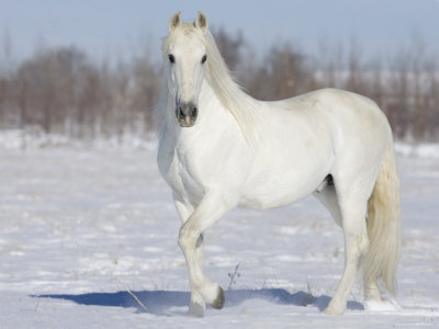 How Well Do You Know Your Horse Colours And Markings