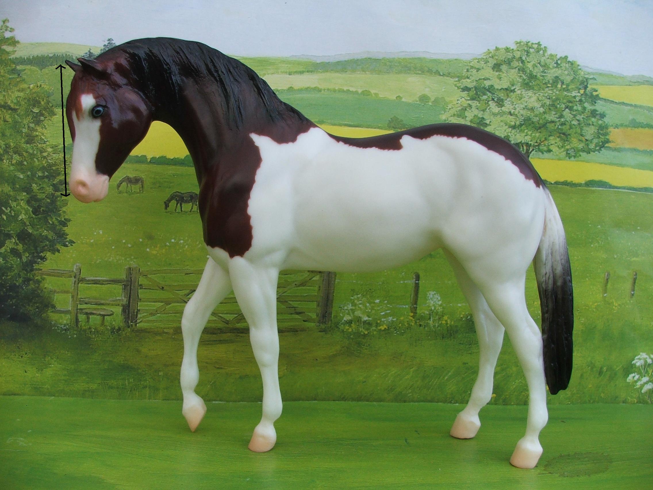 Equine Anatomy & Physiology - Veterinary Terminology