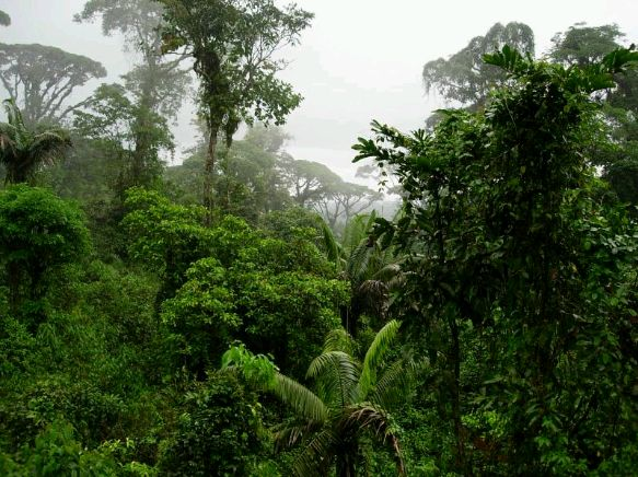 tropical rain forest and tropical grassland Rainforest layers are the emergent, canopy, understorey and forest floor levels  grasslands are flat  grasslands are found in both tropical and temperate zones.