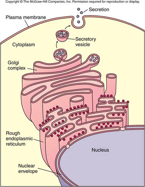 Anatomy And Physiology Chapter 3 - ProProfs Quiz
