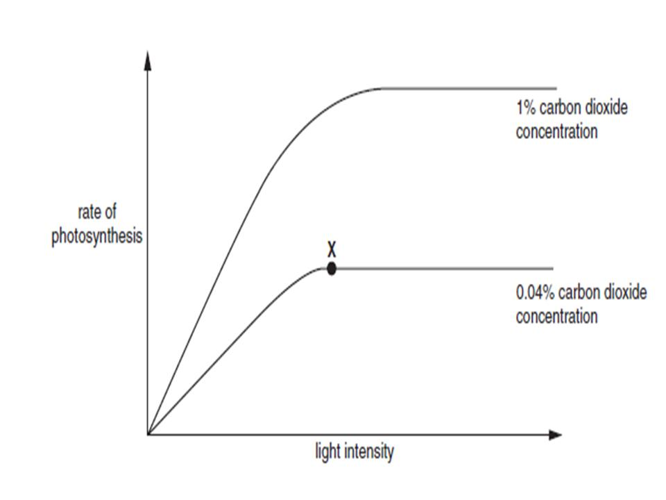 a study of the effects of wavelength and light intensity on photosynthetic activity Photosynthetic-mediated proteins in sub-compartments of chloroplasts including stomatal opening and closing and photosynthetic activity responded most to blue leds of high light intensity the response of photosynthesis was more sensitive in blue leds than red and green leds.