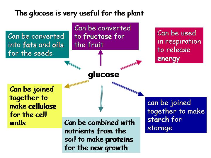 what are the products of photsynthesis Two products of photosynthesis are glucose and oxygen.