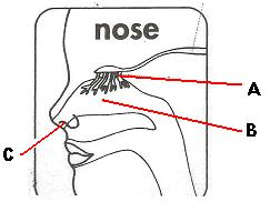 Label The Nose