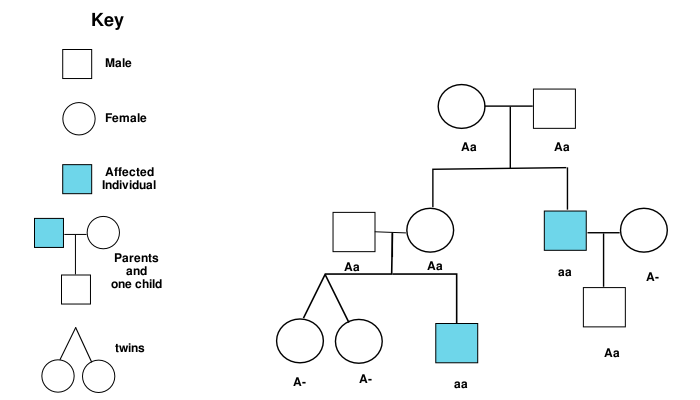 Applied Genetics Practice Exam ProProfs Quiz – Autosomal Pedigree Worksheet