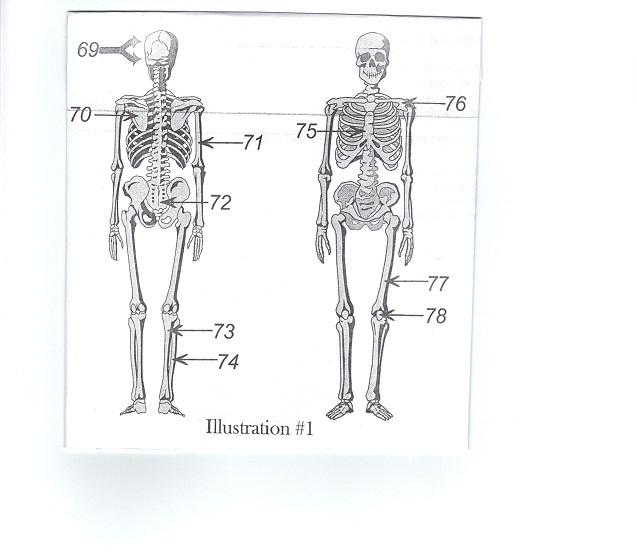 IV. Anatomy & Physiology - ProProfs Quiz