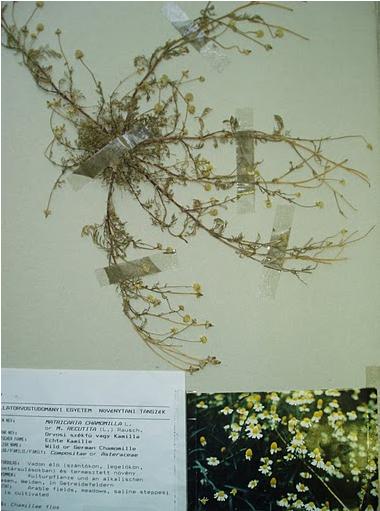 Botany - Medicinal Plants