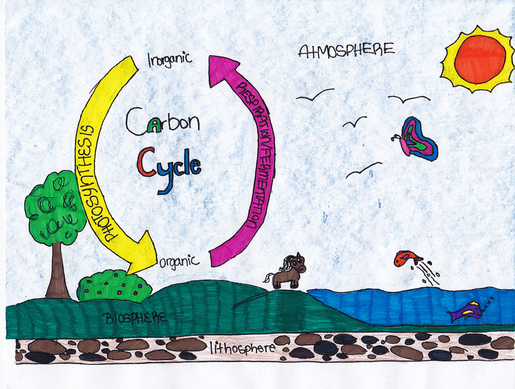 Hope's Carbon Cycle