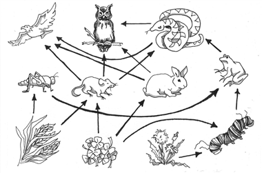 Ecosystems Proprofs Quiz Coloring Pages Of Food Chains