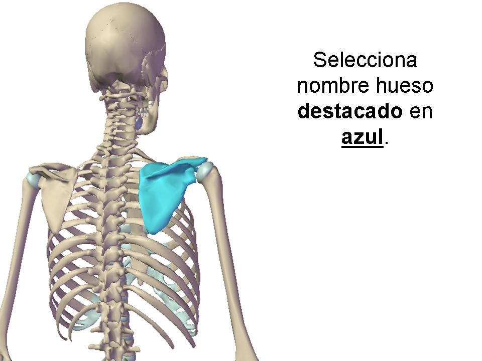 Huesos Esqueleto Humano - ProProfs Quiz