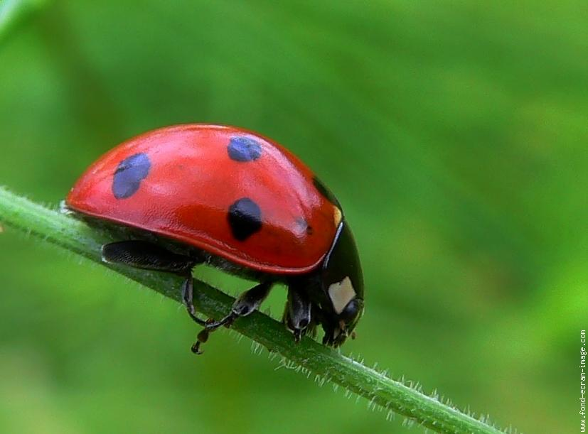 Savez vous nommer les insectes en fran ais proprofs quiz for Insectos del jardin