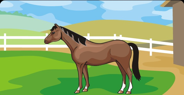 Horse Quiz- Think you know a lot about horses?