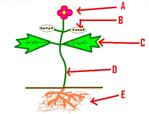 Plants Review Quiz - Mr. Prochaska
