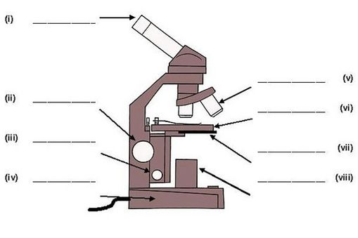 Microbiology lab midterm proprofs quiz label all the parts of the microscope ccuart Gallery
