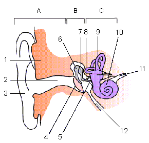 Ear reading quiz proprofs quiz what is the name of the 3rd ear part ccuart Gallery