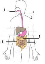 Responsi Anatomi Sistem Pencernaan By SUSMAWATI,. S.Kep,. Ns