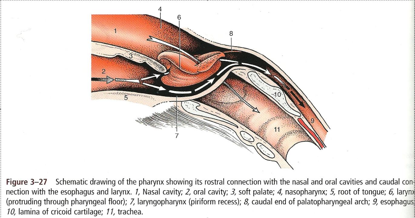 Anatomy II - Class - ProProfs Quiz