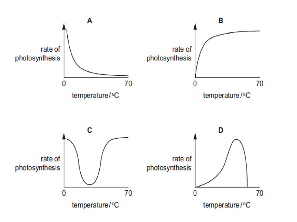 the rate of phtosynthesis