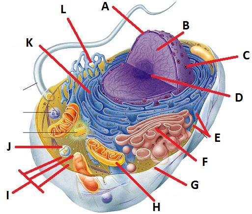 Parts Online: Cell Parts Online Quiz