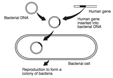 le hw3 8 genetic engineering proprofs quiz : genetic engineering diagram - findchart.co