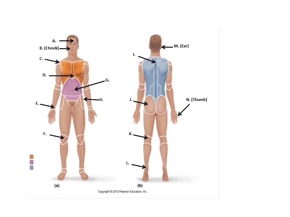 unit i language of anatomy proprofs quiz. Black Bedroom Furniture Sets. Home Design Ideas