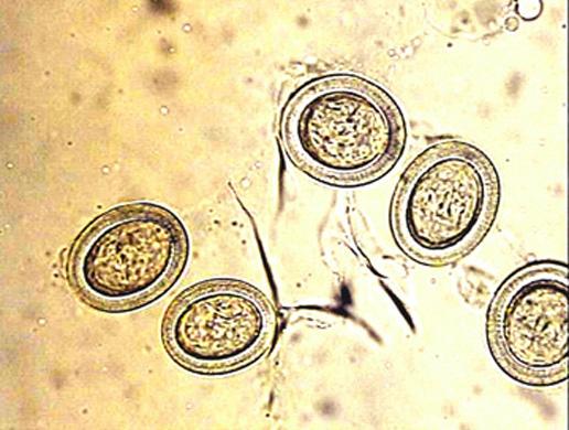Vet CDE - Parasites - ProProfs Quiz