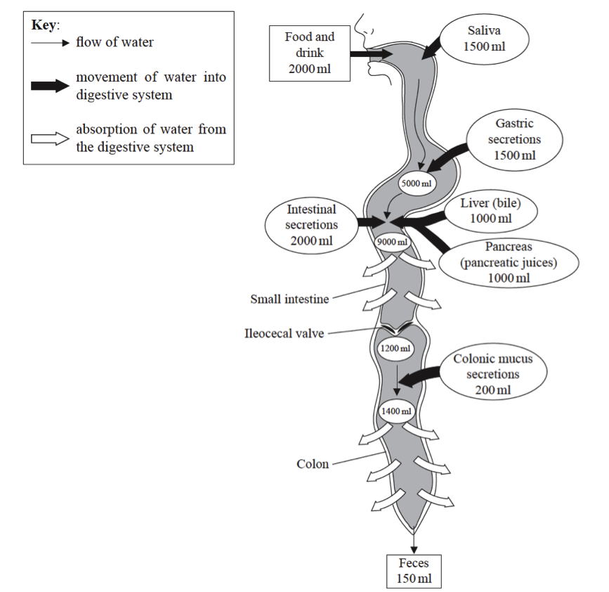 diagram of colon and prostate