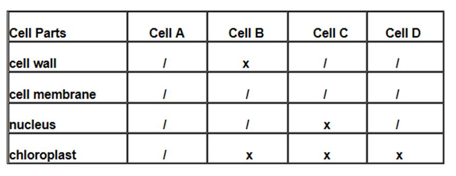 cells practice exam Sample test questions on eukaryotic cells (part i) for students and educators, from the virtual cell biology classroom.