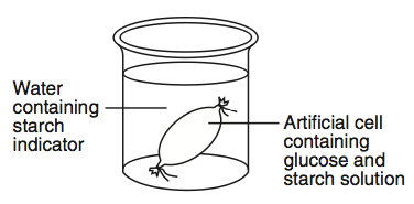 diffusion practical visking tubing 1 As and a level biology a 4 delivery guides are designed to represent a body of the effect of surface area to volume ratio on the rate of diffusion (215d) this practical uses agar and phenolphthalein as an indicator.