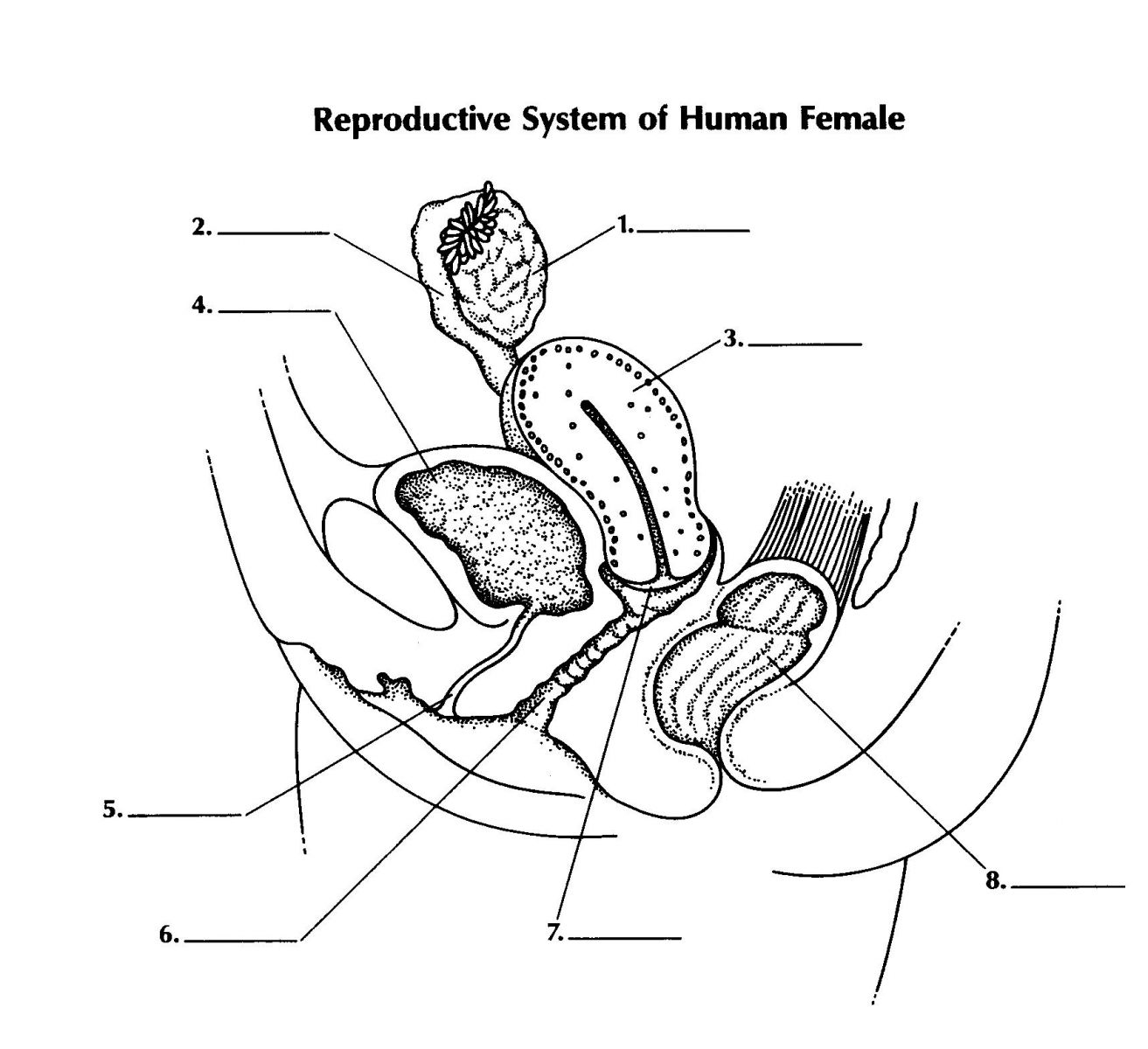 Printables Female Reproductive System Worksheet reproductive system of female proprofs quiz label 8