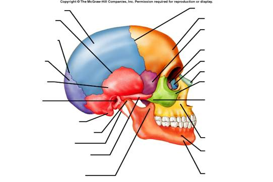 Color Skull Diagram Wiring Source